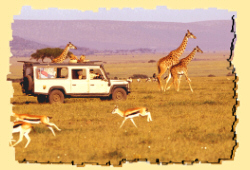 safari reviews in Africa
