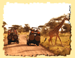 safari Uganda reviews
