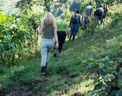 trekking Bwindi up