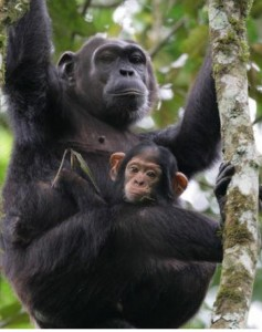 Primate capital