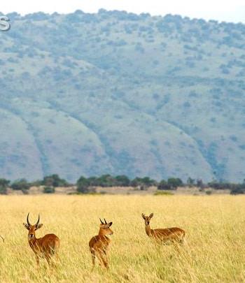 Kabwoyo Game Reserve..