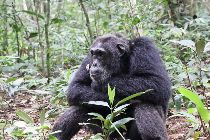 Primates safari travel