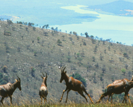 Akagera National Park- Rwanda
