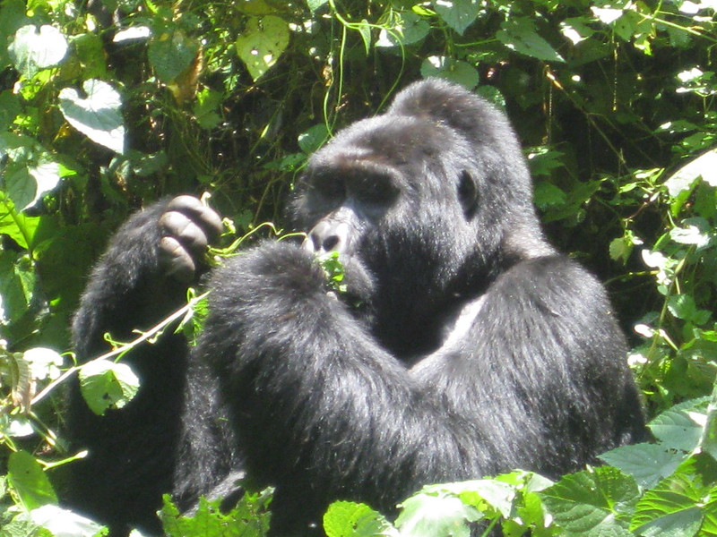 bwindi national park safaris tours