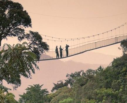 Canopy walk in Nyungwe Forest