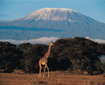 Mt Kilimanjaro...