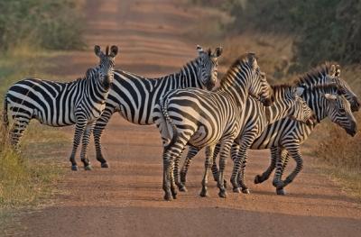 mburo safari