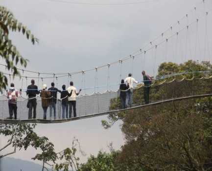 The Nyungwe forest canopy walk..