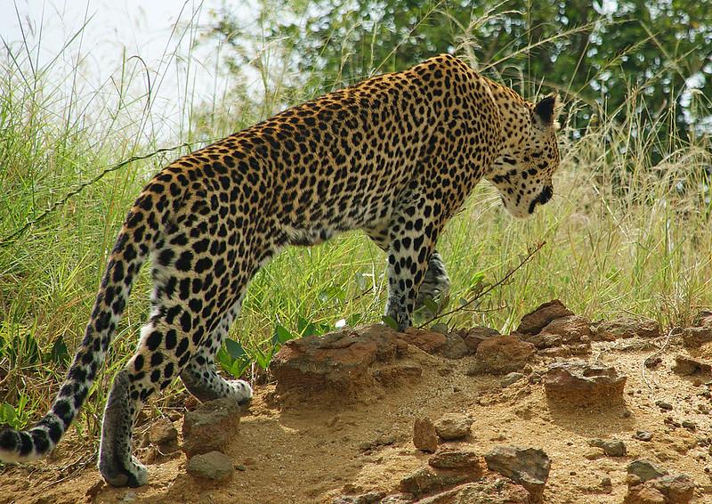 safaris to uganda tours