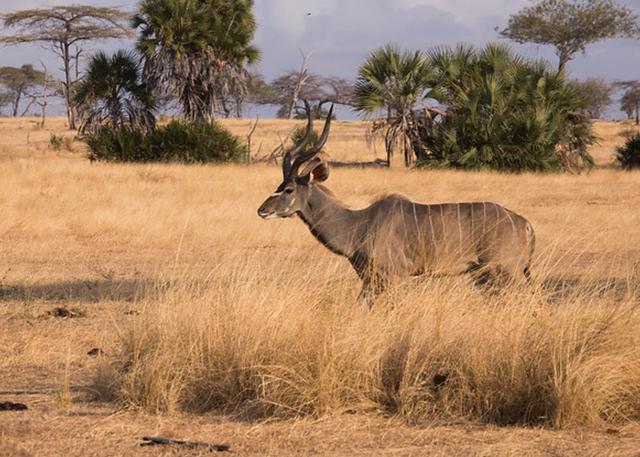 selous-tanzania