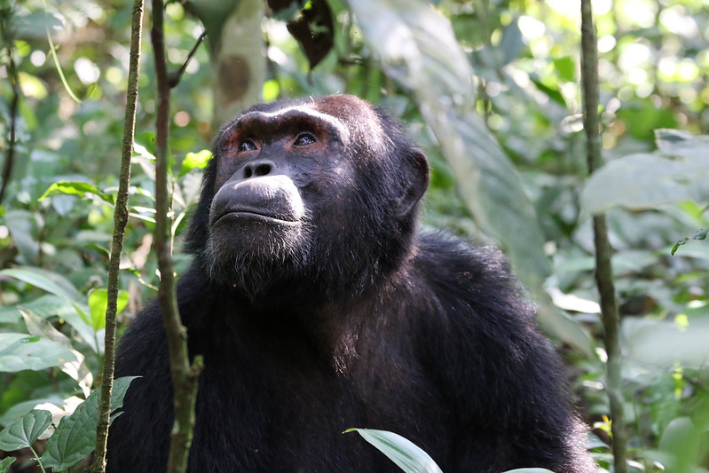 uganda Africa kibale tours